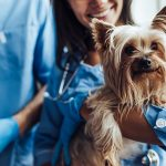 OSHA Compliance Checklist: Avoiding Common Violations in Vet Practices