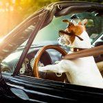 Mobile Veterinary Care