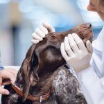 Dog Allergy Testing: Blood vs Skin -- Key Differences and Recommendations