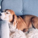 Dog Heartworm Treatment: Side Effects, Aftercare, and Success Rates