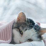 Saviez-vous que 96,7% des chats et 83,6% des chiens souffrent d'hypothermie ?