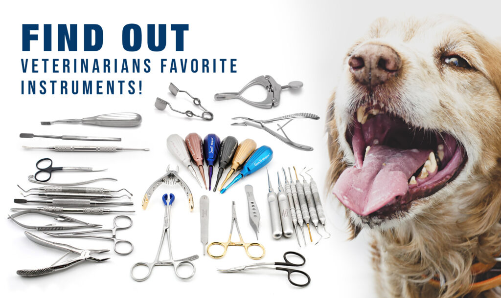 Veterinary dental instruments purchase guide 2021